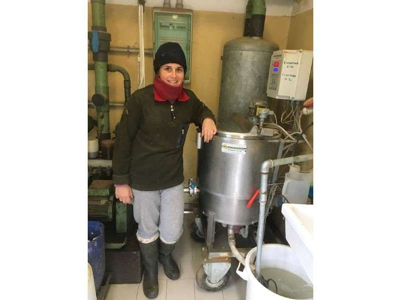 milk-pasteurizer-for-calves